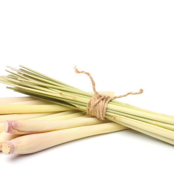 Bundle of lemon grass on white background