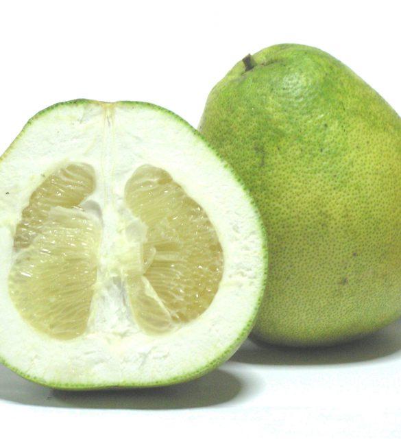 Citrus_grandis_-_Honey_White