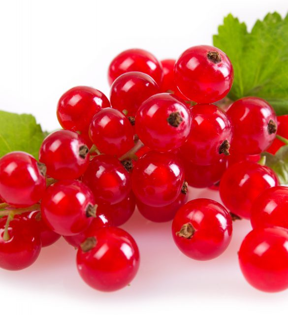 red currant with leaves on white background