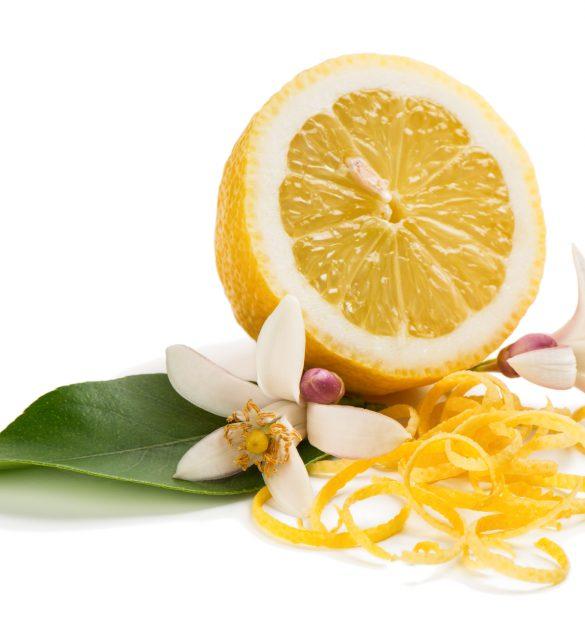 Zest and flower and lemon fruit isolated on white background.